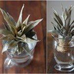 ananas-saksida-3