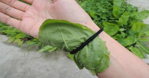bu-bitkiyi-kolunuza