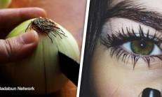 Soğan Kürü ile Göz Renginizi Değiştirin