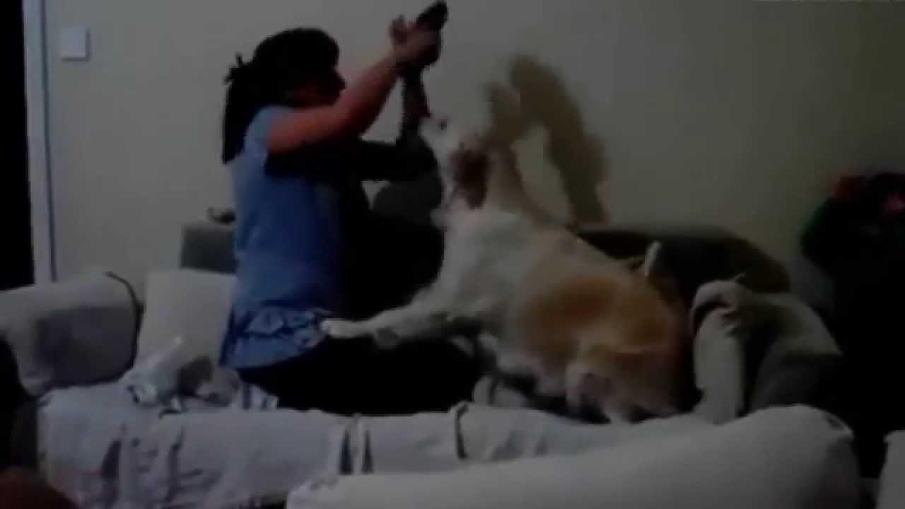 Çocuğu Annesinden Dayağından Köpekler Koruyor