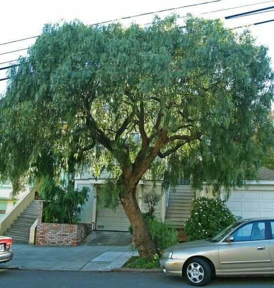 Belediye Tarafından Kesilen 30 Yıllık Ağacının İntikamını Öyle Bir Aldı ki...