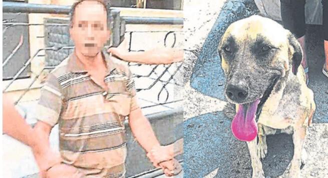 Sokak Köpeği 10 Yaşındaki Çocuğun Hayatını Kurtardı.