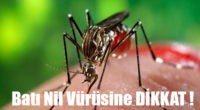 Batı Nil Virüsüne Dikkat !