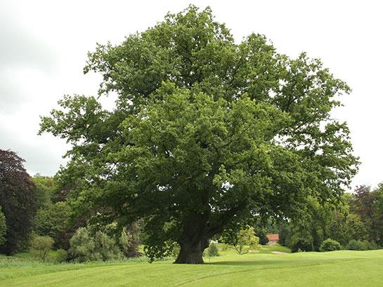 Doğduğun Aya Göre Doğum Ağacın Senin Hakkında Ne Söylüyor?