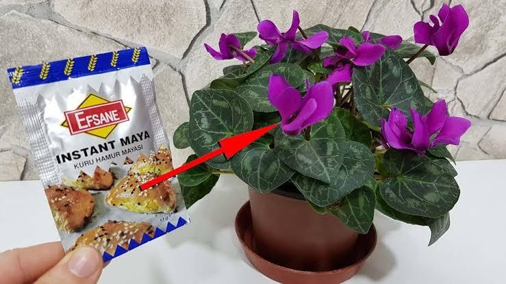 Maya ile Çiçek Coşturan Tarifi